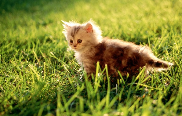 Picture grass, green, Kitty