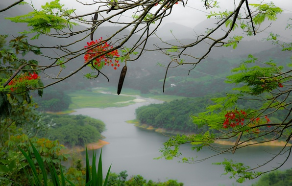 Picture flowers, mountains, fog, river, tree, island, branch, Puerto Rico