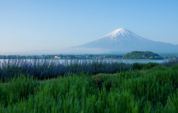 Picture mountain, the volcano, Japan, meadow, Fuji, Japan, Mount Fuji, lavender, Fuji, Lake Kawaguchi, Lake Kawaguchi