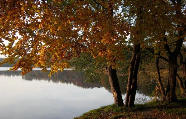 Picture Poland, nature., Marchowo, tres