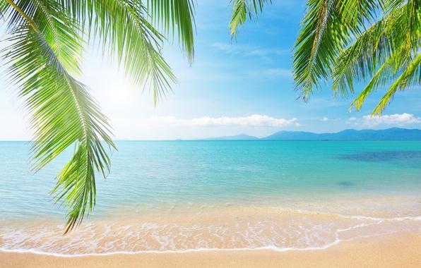 Picture sea, the sky, clouds, landscape, branches, nature, tropical beach, palm trees, shore, sky, sea, landscape, …