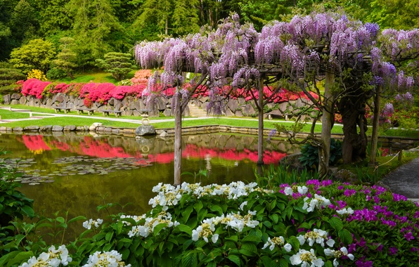 Picture pond, Seattle, Japanese garden, hydrangea, Seattle, Washington, Wisteria, Wisteria, Washington State, Seattle Japanese Garden