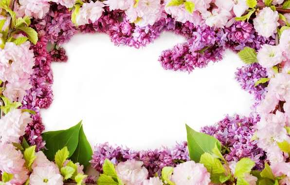 Picture flowers, spring, flowering, flowers, lilac, spring, lilac bloom
