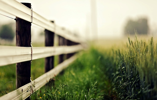 Picture wheat, greens, grass, macro, nature, background, widescreen, Wallpaper, the fence, rye, blur, fence, spikelets, the …