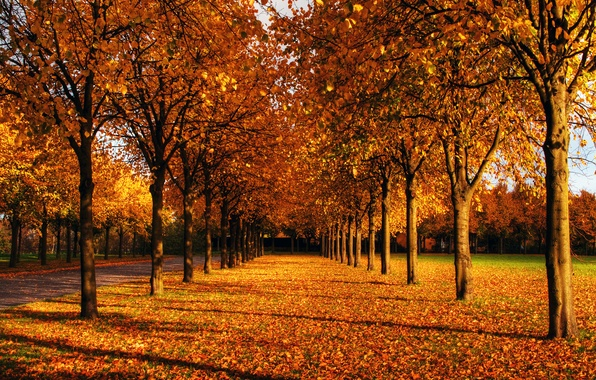 Picture autumn, the sky, leaves, the sun, trees, Park, branch, blue, day, track, shadows, red, alley, …