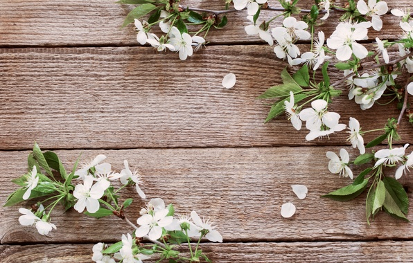 Picture flowers, spring, petals