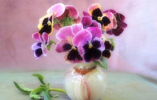 Picture flowers, tenderness, bouquet, vase, still life, violet