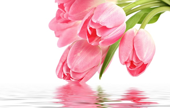 Picture flowers, reflection, pink, Tulip, pink, flowers, for you, holidays, reflection, with love, with love, tulip, …