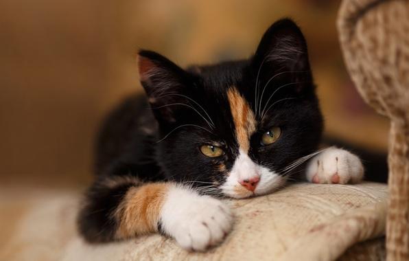Picture cat, cat, cat face