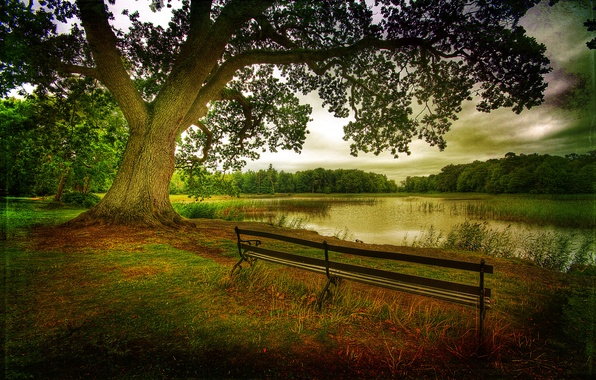 Picture autumn, forest, leaves, trees, landscape, nature, lake, tree, benches