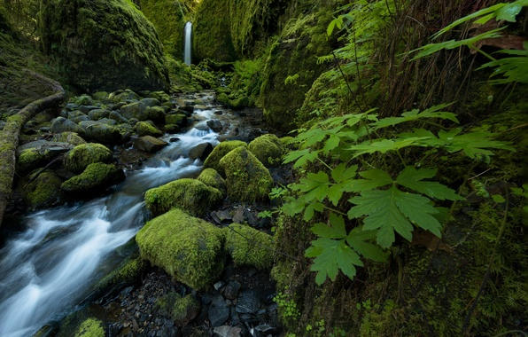 Picture leaves, stream, stones, waterfall, moss, Oregon, Columbia River Gorge, Mossy Grotto Falls, Ruckel Creek