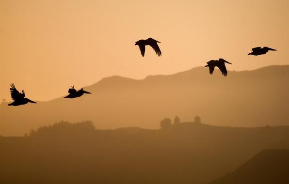 Picture flight, hills, Birds