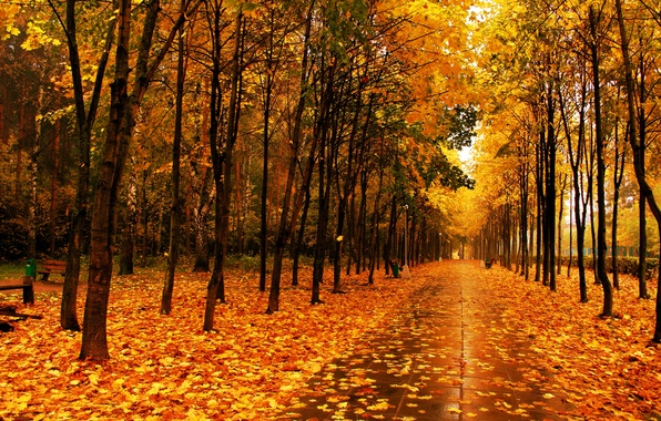 Picture leaves, trees, Park, Autumn, alley
