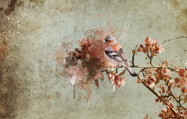 Picture background, bird, branch
