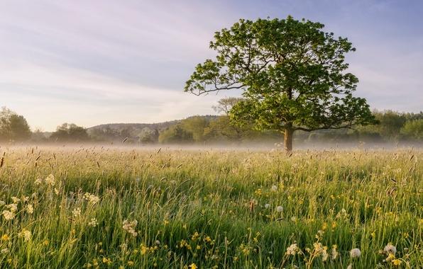 Picture field, landscape, fog, tree
