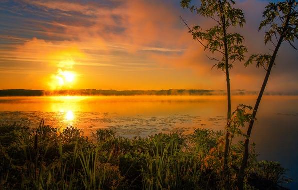 Picture summer, the sun, fog, lake, sunrise, morning
