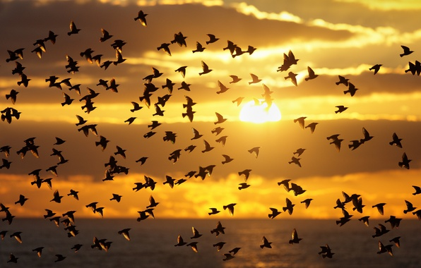 Picture the sky, the sun, clouds, sunset, birds, pack, silhouette
