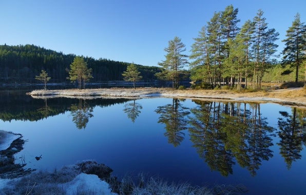 Photo wallpaper reflection, the sky, forest, pine, trees, river, landscape