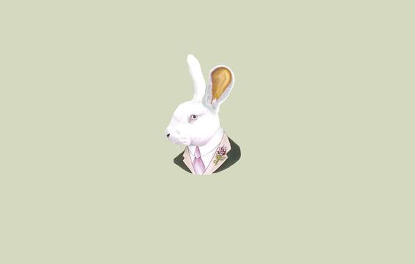 Picture hare, minimalism, head, rabbit, tie, light background, rabbit, soup