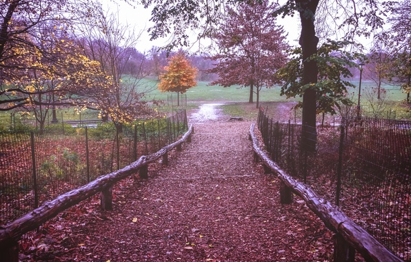 Picture field, autumn, leaves, trees, branches, fog, the way, the fence, New York, Brooklyn, United States, …