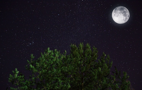 Picture space, stars, night, the moon, pine