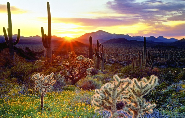 Picture Flowers, The sun, The sky, Mountains, Sunrise, Rays, Cacti
