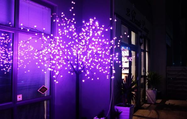 Picture light, tree, neon, decor
