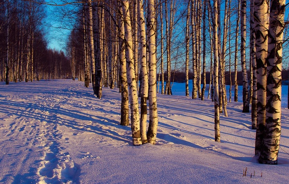Picture winter, forest, snow, trees, landscape, traces, the evening
