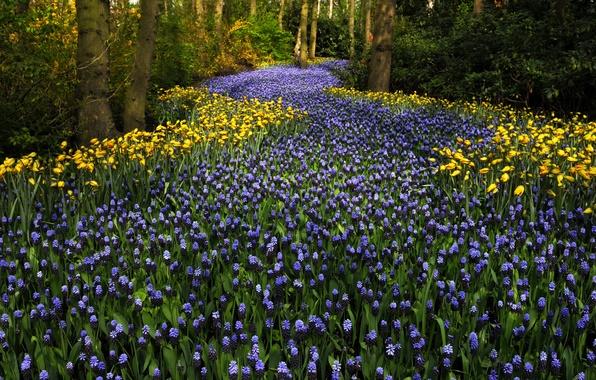 Picture trees, flowers, Park, tulips, Netherlands, Keukenhof, hyacinths