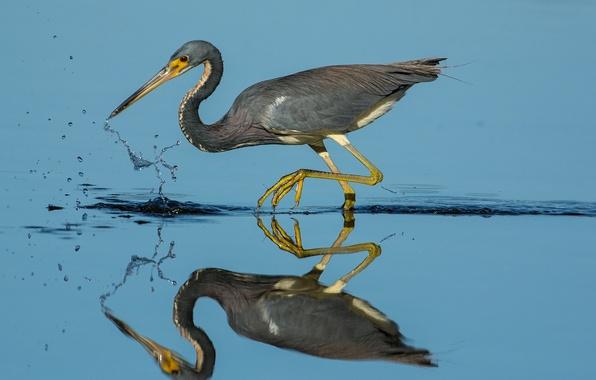 Picture water, reflection, bird, beak