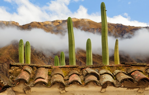 Picture roof, clouds, mountains, cactus, tile, Peru, Ollantaytambo