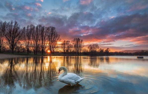 Picture sunset, lake, Swan