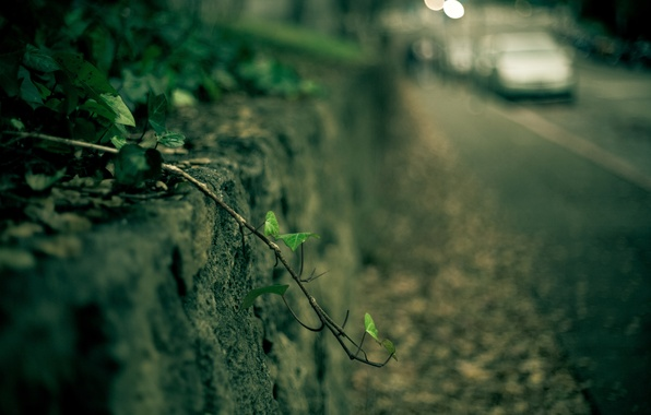 Picture machine, leaves, macro, green, background, Wallpaper, plant, blur, branch, leaf, wallpaper, car, widescreen, background, macro, …