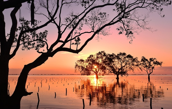 Picture trees, sunset, Bay, mangroves, Philippines, Philippines, Mindanao, Mindanao