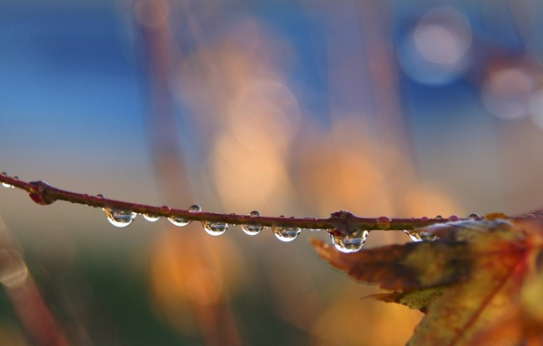 Picture autumn, leaves, drops, branch