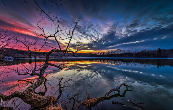 Picture the sky, water, clouds, landscape, sunset, branches, nature, tree, the evening, Lake