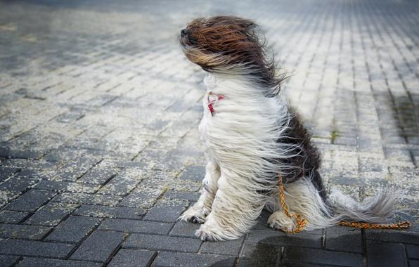 Wallpaper the wind, street, dog