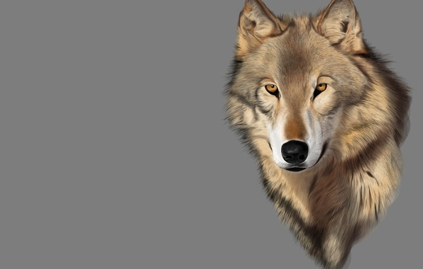 Picture look, rendering, mood, wolf, predator, art
