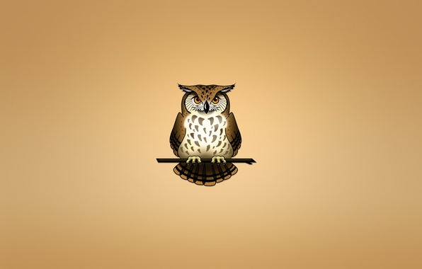 Picture owl, bird, branch, light background, owl