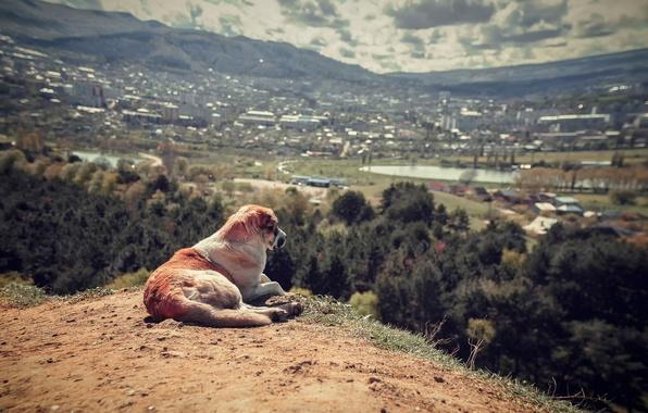 Picture landscape, view, dog