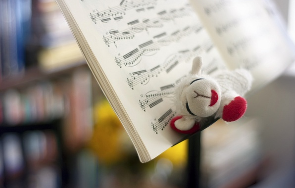 Picture notes, music, toy