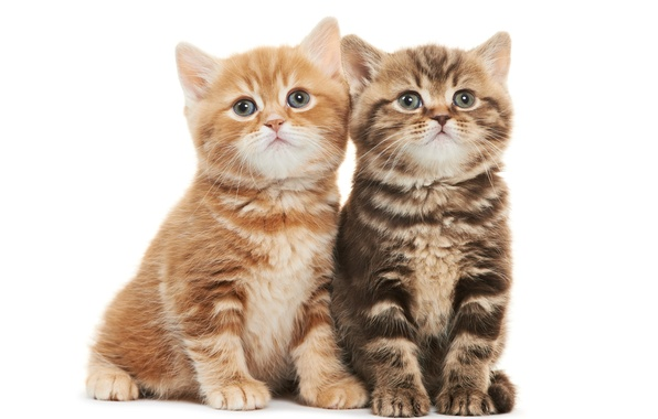Picture kittens, kids, Duo
