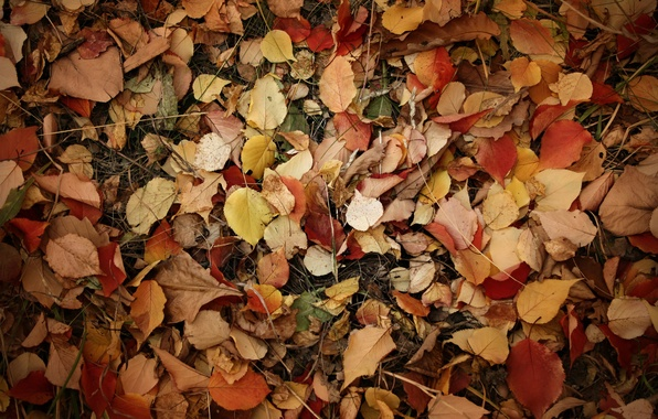 Picture leaves, branches, earth, Autumn