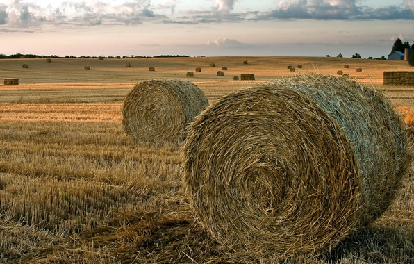 Picture field, summer, landscape, hay