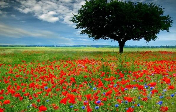 Picture field, flowers, tree, Maki, 153