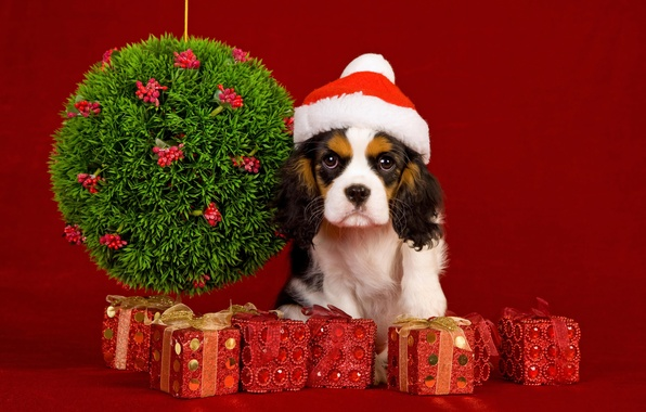 picture balls decoration holiday dog new year christmas christmas