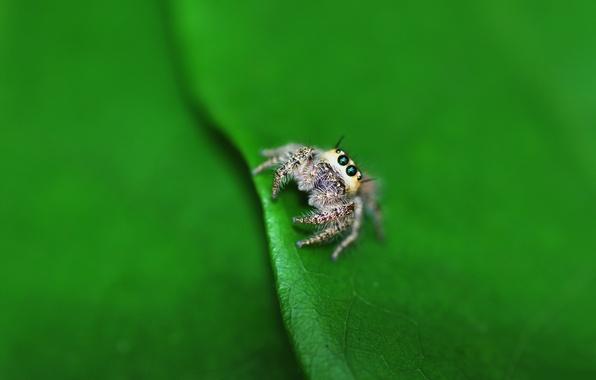 Photo wallpaper macro, sheet, spider, lil spider