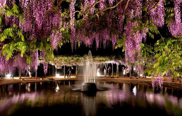Picture flowers, fountain, gazebo