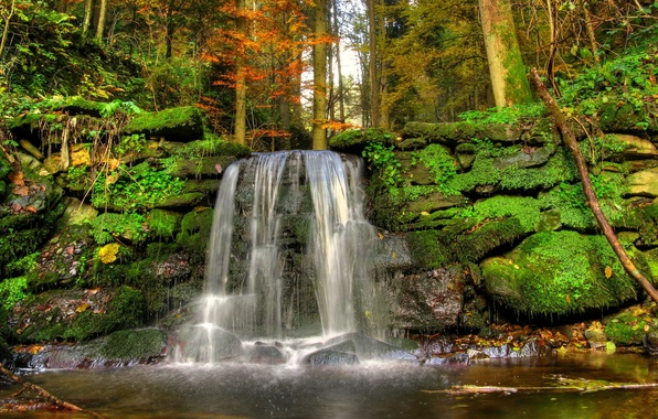 Picture forest, trees, landscape, nature, stream, stones, waterfall, moss
