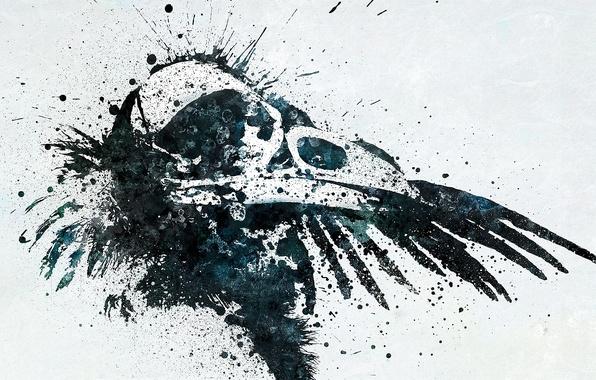 Picture squirt, skull, beak